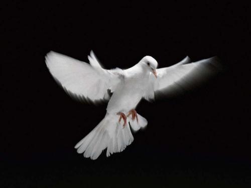 john-woo-colomba-bianca[1].jpg