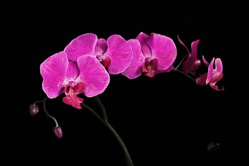 orchidea_by_wktr-d36pqrj.jpg
